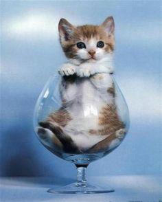 KYWIE wijnglas